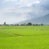 Landscape of beautiful green farm Stock Images