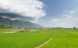 Landscape of beautiful green farm Stock Photography