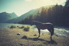 The landscape of beautiful mountain lake with the horse in the Altai mountains on background, in summer, Siberia, Altai mountain. Republic, Russia royalty free stock photo