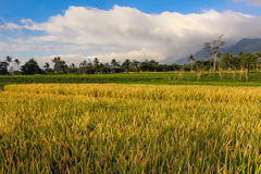 Landscape beautiful Mountain with padi field. Ciremai mountain landscape, the picture is taken from a paddy field of location Linggarjati Kuningan, West Java Stock Images