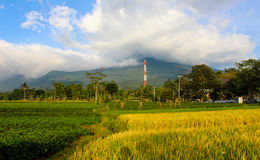Landscape beautiful Mountain with padi field. Ciremai mountain landscape, the picture is taken from a paddy field of location Linggarjati Kuningan, West Java Royalty Free Stock Photography