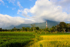 Landscape beautiful Mountain with padi field. Ciremai mountain landscape, the picture is taken from a paddy field of location Linggarjati Kuningan, West Java Stock Image
