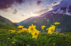 Landscape of beautiful mountains at sunset. Yellow flowers on foreground on mountain meadow on evening sky and hills background. Nature of Svaneti, Georgia stock photo