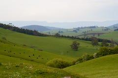 Landscape. Beautiful rolling hills along the Great Alpine road in Australia Stock Image