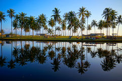 Landscape of beautiful sunrise. With coconut palm trees and blue sky Royalty Free Stock Photos