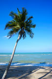 Landscape of beautiful tropical beach Royalty Free Stock Image
