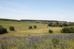 Landscape. Beautiful view of a peaceful Ukrainian country side Royalty Free Stock Photography