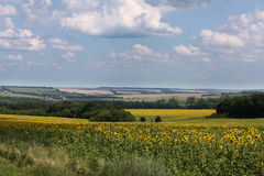 Landscape. Beautiful view of a peaceful Ukrainian country side Stock Photography