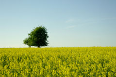Landscape with beautyful yellow meadow Royalty Free Stock Photography