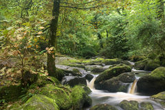 Landscape of Becky Falls waterfall in Dartmoor National Park Eng Royalty Free Stock Images