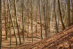 Landscape with beech forest on springtime Royalty Free Stock Photos