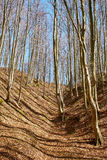 Landscape with beech forest on springtime Stock Image