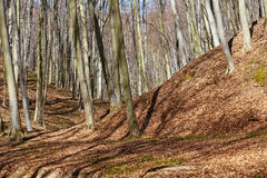 Landscape with beech forest on springtime Stock Photo