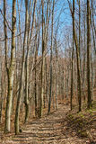 Landscape with beech forest on springtime Royalty Free Stock Image