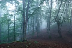 Colorful landscape with beech forest and the sun, with bright rays of light beautifully shining through the trees and morning fog. Landscape with beech forest Stock Photo
