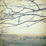 Landscape beskådar Arkivfoto
