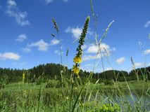 Landscape with beutiful sky and flower. Landscape with beutiful sky, flower and grass Royalty Free Stock Photography