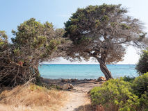 Landscape of Bidda Rosa beach Sardinia Italy Royalty Free Stock Photography
