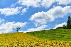 Landscape of Biei, Hokkaido. Royalty Free Stock Photos