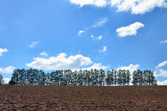 Landscape of Biei, Hokkaido. Royalty Free Stock Photo