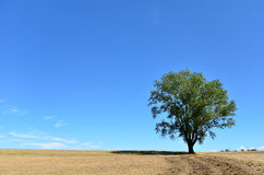 Landscape of Biei, Hokkaido. (Poplar tree) Royalty Free Stock Photography
