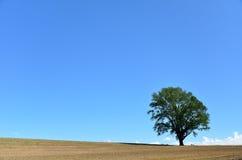 Landscape of Biei, Hokkaido. (Poplar tree) Stock Photos
