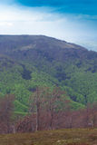 Landscape of a big green mountain with trees Royalty Free Stock Image