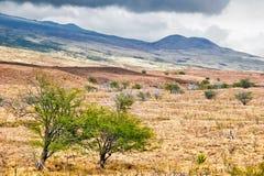 Landscape of Big Island. Hawaii. Stock Image
