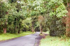 Big Island - Hawaiian Fauna. The landscape of the Big Island of Hawaii will soon be changed.  The Lava Tube Park, is a public park that visitors may enjoy Stock Image