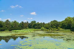Landscape with big pond Royalty Free Stock Images