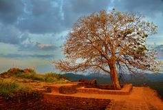 Landscape with Big tree. In yellow and red color ruines of ancient city Royalty Free Stock Photos