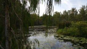 Landscape. Billabong Australia waterhole  tranquility Royalty Free Stock Images