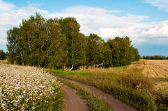 Landscape with birch Stock Photo