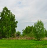 Landscape with birch Royalty Free Stock Image