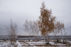 Landscape with birch trees in cloudy weather. Parallels. First snow at autumn season royalty free stock photos