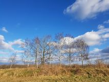 A landscape with birch trees in a rural area of Berlin at a sunn Royalty Free Stock Photo