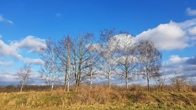 A landscape with birch trees in a rural area of Berlin at a sunn Stock Photography