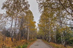 Landscape with birches along the way, Vitosha Mountain, Bulgaria Stock Photo