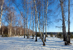 Landscape with birches glove Royalty Free Stock Photography