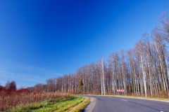 Landscape with birches and road Stock Photography
