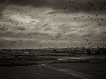 Landscape with birds in Valencia, Spain Stock Image