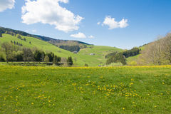 Landscape in the Black Forest with blooming meadow Royalty Free Stock Images