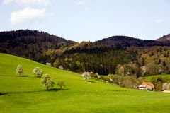 Landscape in the Black-forest, Germany ,Glottertal Stock Photography