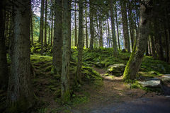 Landscape Black Forest Royalty Free Stock Photos
