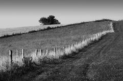 Landscape. Black and white landscape with tree Royalty Free Stock Images