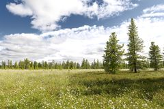 Landscape with blooming Cotton Grass Stock Photos