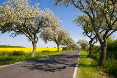 Landscape with blossom apple tree Stock Images