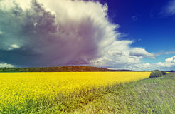 Landscape with blossoming field of rape Stock Image