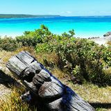 Landscape of blue  sculpted wood in Mare, new caledonia Royalty Free Stock Photo