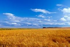Landscape with blue sky Stock Photo